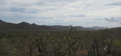 Lots/Land For sale in El Pescadero, Baja California Sur, Mexico - Sin Nombre, Lote 1013